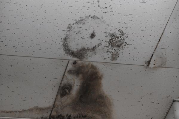 天井のシミ